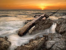Tree Limb On The Shore Royalty Free Stock Images