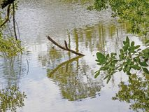 Tree limb in a pond Stock Photos