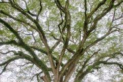 Tree limbs Stock Image