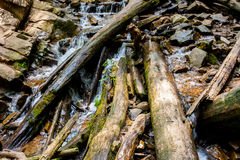 Tree Limbs And Rock Royalty Free Stock Photography
