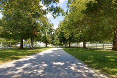 Tree Linded Alley Stock Images