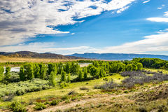 Tree line along Yampa River Stock Images
