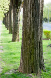 Tree line Royalty Free Stock Photos