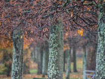 Tree line in autumn. Petergof Lower Park. Russia Royalty Free Stock Images