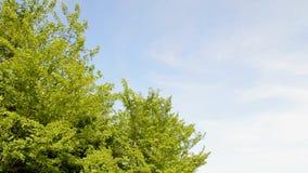 Tree line Stock Image