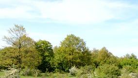 Tree line Royalty Free Stock Photography
