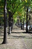 Tree line in the city Stock Photography