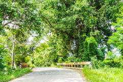 the tree line in the country road Stock Photos