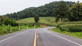 Tree line in the country road Stock Photography