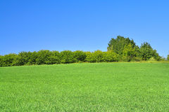 Tree line Stock Photography