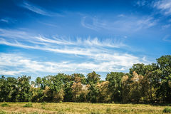 Tree line and grass with blue cloudy sky. Summer day stock photography