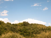 Tree line green background with blue sky and clouds Royalty Free Stock Image