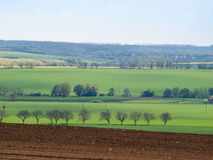 Tree line with green spring fields Royalty Free Stock Photo