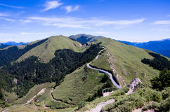 Tree line of high mountain Stock Images