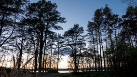 Tree line with lake royalty free stock images