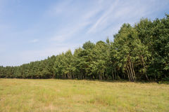 Tree line in landscape Stock Photography
