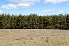 Tree Line at Meadow Stock Photos
