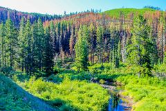 Tree line in the meadow. With stream, Waiprous County, Alberta, Canada Stock Photo