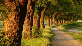 Tree line in park. Ameizing tree line in park beautiful arranged along the trail Royalty Free Stock Images