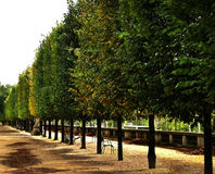 Tree Line in the Park Royalty Free Stock Photography
