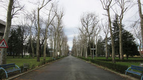 Tree-line promenade, avenua walkway in winter with naked trees, just after the rain under the cloudy sky Royalty Free Stock Photos