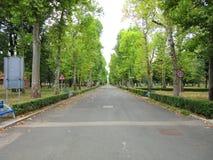 Tree-line promenade Royalty Free Stock Image