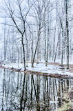 Tree line reflections in lake during winter Stock Image