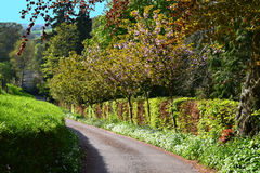 Tree Line Road in Devon UK. Photo taken during the summer months when visiting England.  Notice how close the young trees are growing next to the hedgerow by a Royalty Free Stock Photo