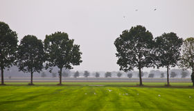 Tree line Royalty Free Stock Images
