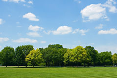 Tree Line with Sky. Sky with cumulus clouds over tree line and lawn Stock Photos