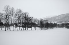 Tree line in snow Stock Images