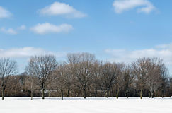 Tree Line in Snow with Sky Stock Image