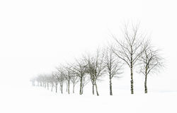 Tree Line In Snow Stock Photography