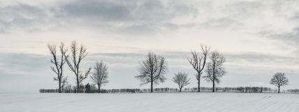 Tree Line In Snow. Tree line in winter snow England, UK in evening light royalty free stock photos