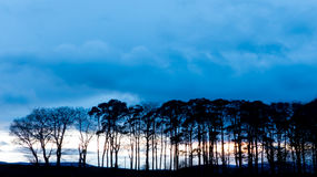 Tree line during sunset Stock Images