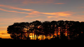 Tree line during sunset Stock Photos