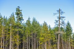 Tree line from top of a logging mountain on Vancouver Island, BC, Canada royalty free stock photography