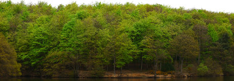 Tree Line View. A view of a tree line in summer along a reservoir bank royalty free stock images