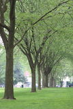 Tree Line Yale University Campus Stock Image