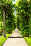 Tree lined alley in a cemetery Royalty Free Stock Photo