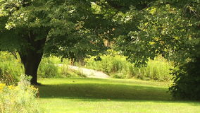 Tree lined alley in the park. Ontario preserves. Old trees, shadow and sun stock video