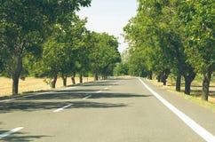 Tree Lined Asphalt Road Stock Photo