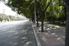 Tree lined avenue. Shaded tree lined urban avenue with sunlight stock photography