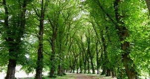 Tree lined avenue. Stock Photo