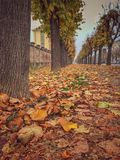 tree-lined avenue in autumn Royalty Free Stock Photos