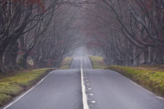 Tree lined avenue Royalty Free Stock Photography