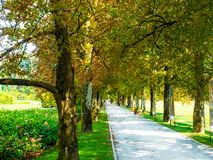 Tree-lined avenue of a colorful garden stock photo