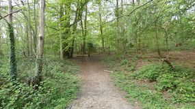Tree lined Avenue at Havering Country Park 5. A spring morning in London, England royalty free stock images