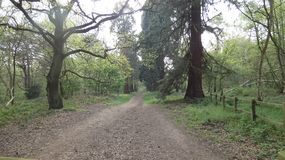 Tree lined Avenue at Havering Country Park 2. A beautiful spring morning in London, England royalty free stock photo