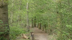 Tree lined Avenue at Havering Country Park 7. The Silver Birch greet you stock photos